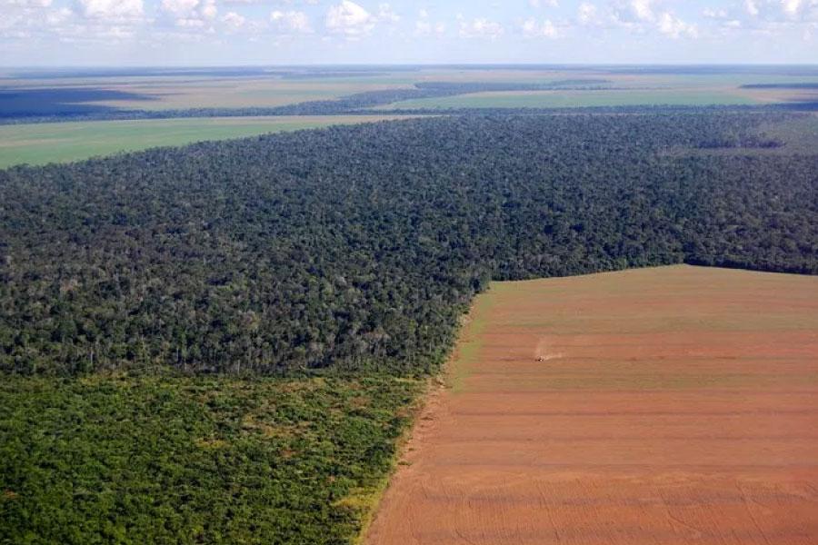 amazzonia deforestazione per carne e prodotti animali