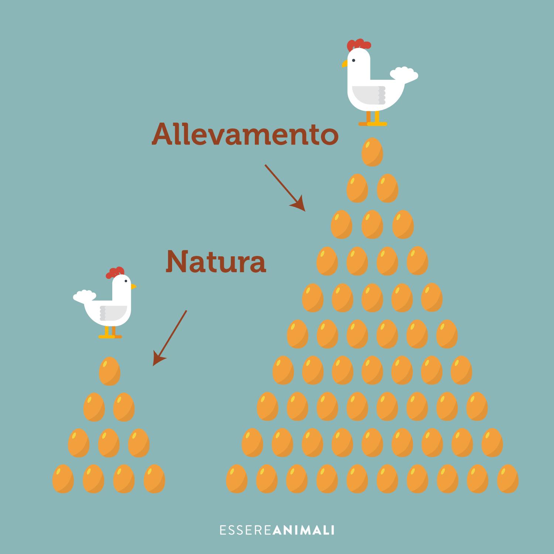 produzione uova in natura rispetto ad allevamento