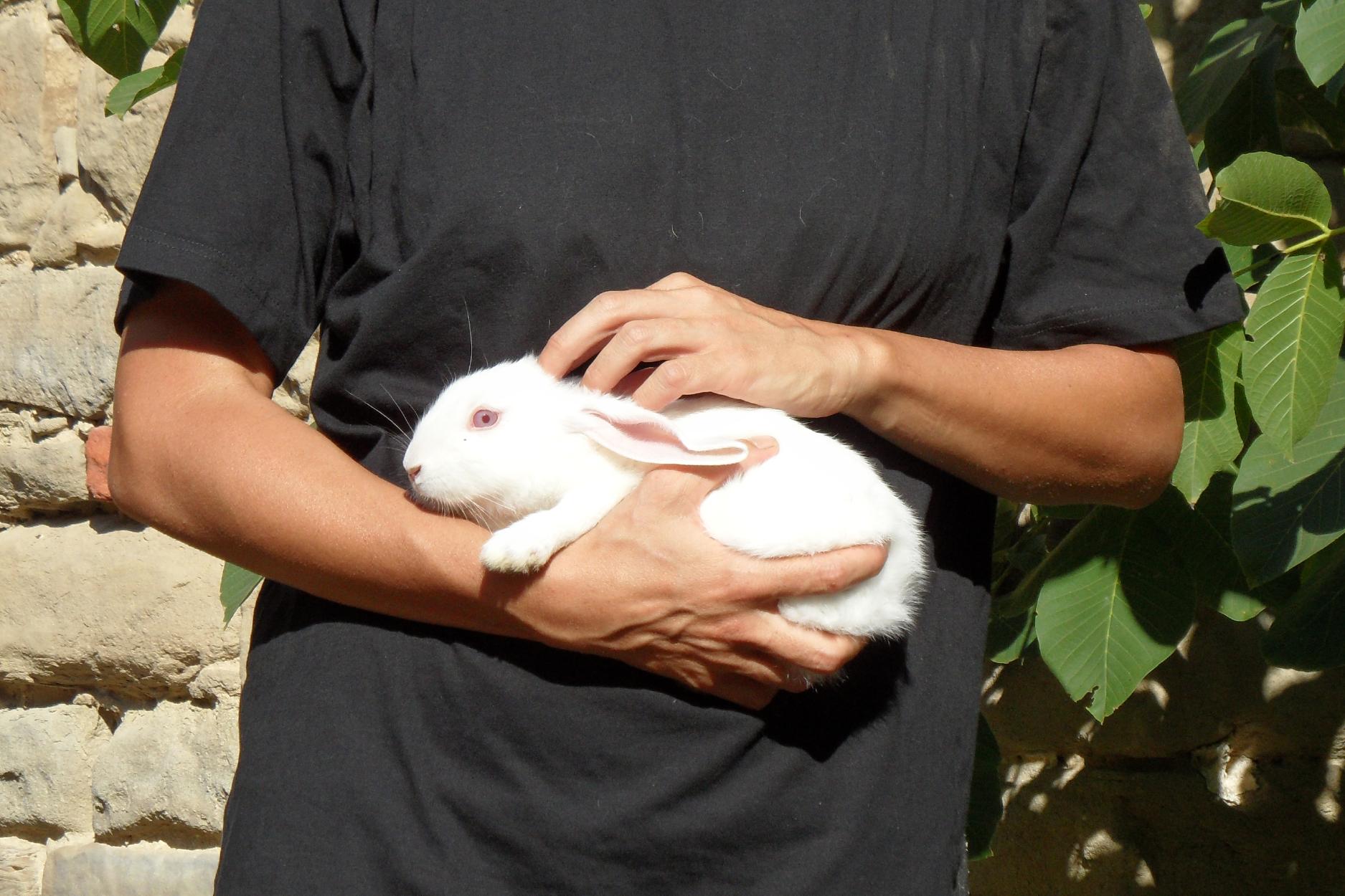 Uno dei conigli liberati.